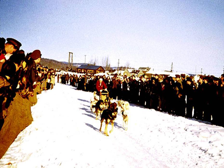 Fairbanks Dog Sled race