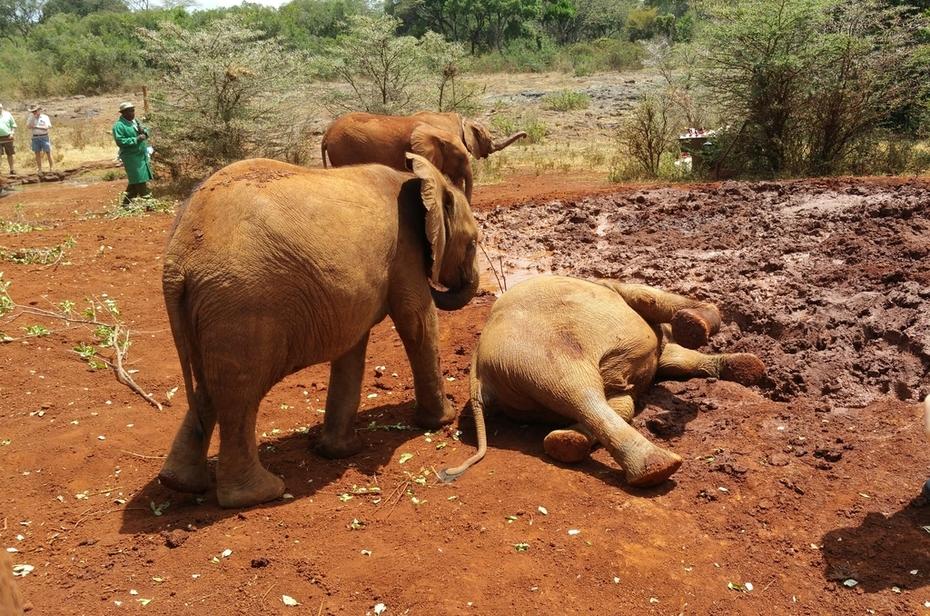 Nairobi, Kenya Elephant Orphanage