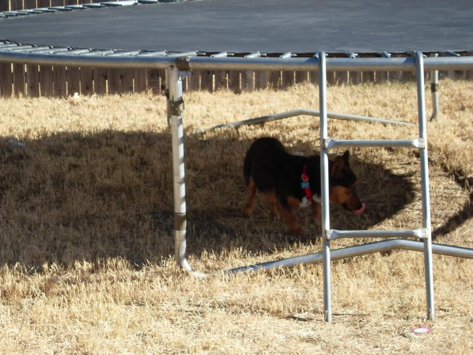 Ein in the Yard