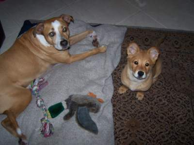 Gemmi & Roscoe