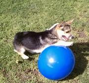 Bailey 7 mos w ball