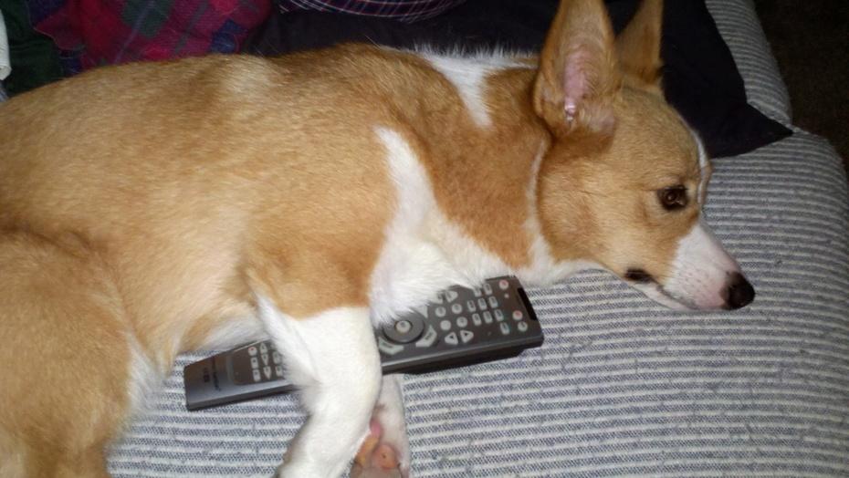 she stole the remote!