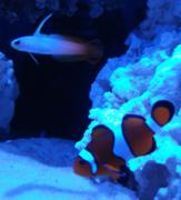 fish background 2