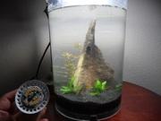 LED over shrimp tank