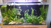 08-13-2014 after trim and replanting other species