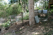 Compost Heap and Chooks