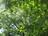 Leaf traits across nutri…