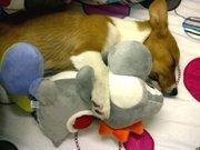 Yoshi slumber party