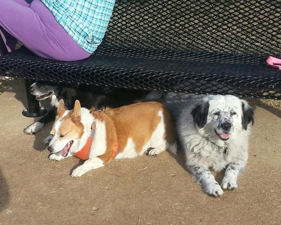 The Three Amigos - DOS