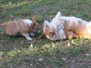 Hilary playing with Cloe