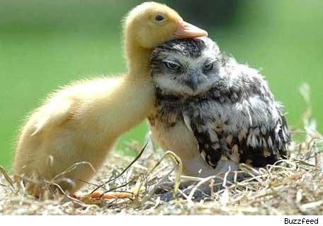 duckandowl
