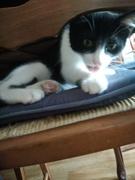 mes cat's