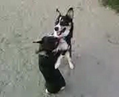 oscar and stewie at the dog park