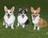 Furby,Baylee&Nellie