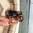Tweety69 (Beth)