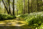 loughgall country park co armagh
