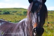 Forgotten Horses Ireland 49