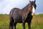 Forgotten Horses Ireland 47