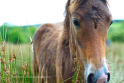Forgotten Horses Ireland 34