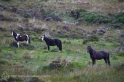 Forgotten Horses Ireland 41