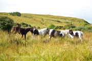 Forgotten Horses Ireland 53