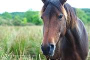 Forgotten Horses Ireland 36