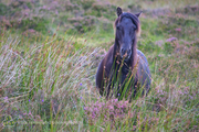 Forgotten Horses Ireland 38