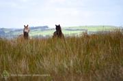Forgotten Horses Ireland 45