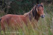 Forgotten Horses Ireland 40