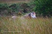 Forgotten Horses Ireland 43