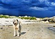 Tadhg On Our Beach