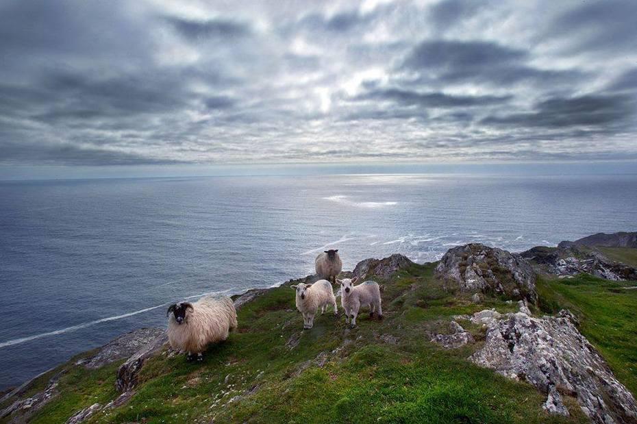 Sheep's Head West Cork