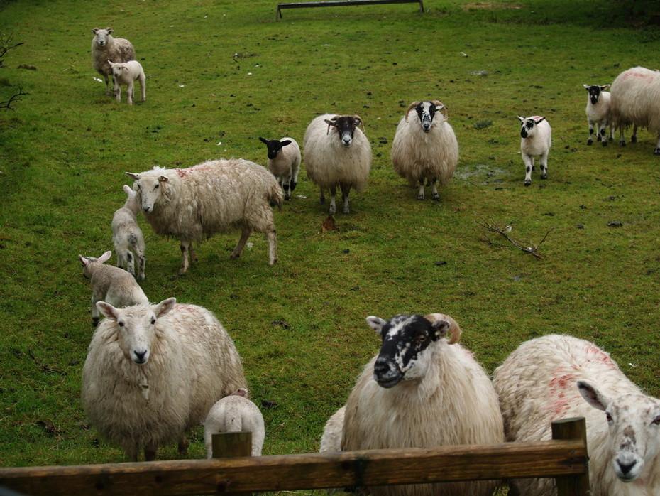 On the Pilgrim's Path, Sliabh Liag