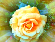 Yellow rose ~symbol of friendship