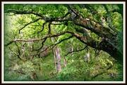 Glendalough woods, Ireland