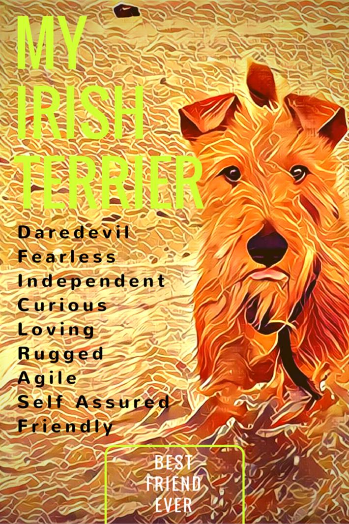 Irish Terrier Traits