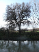 Old Lea, Black Poplar & Hackney Marsh