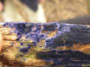 Cobalt crust8