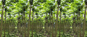 1_plantation-1170x500