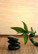 The Divine Wellness Retreat