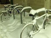 Snow Riders!