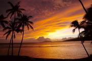 Hawaii Brides & Vendors