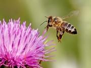 Včelařství a příroda