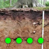 EP Soil