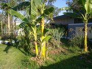 Community Gardens Logan CAN