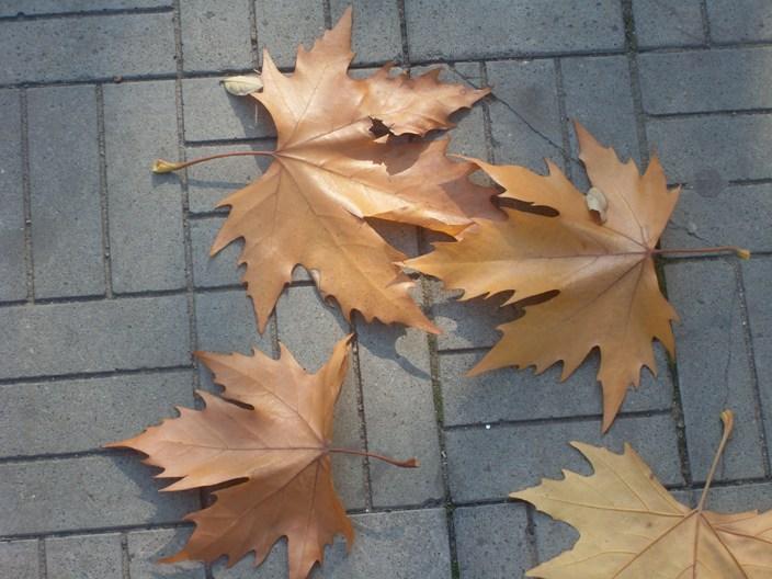 Опавший жёлтый лист