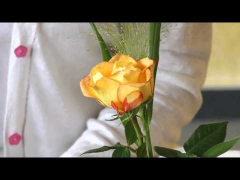Rose Meditation - with Narayani