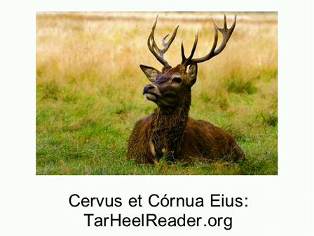 Fabella (4): Cervus et Cornua Eius