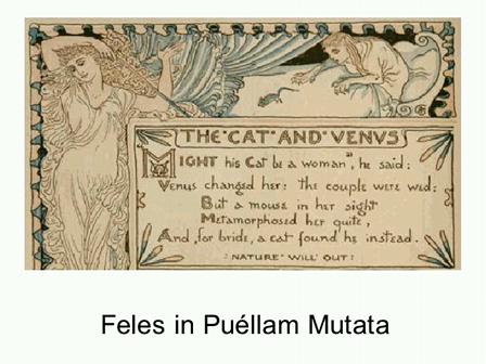 Fabella (3): Feles in Puellam Mutata