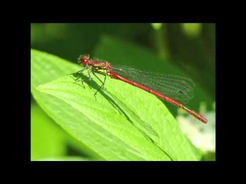 The Wildlife of St Andrews Park, Bristol narrated by John Telfer
